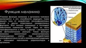 Меланин википедия