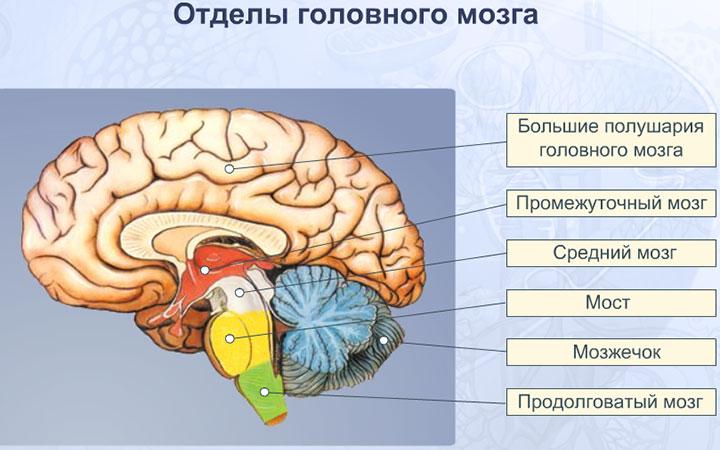 На что способен наш мозг? 10 удивительных фактов