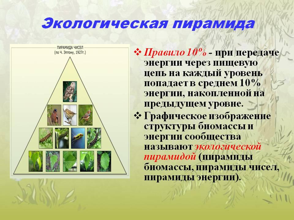 Что такое экологическая пирамида? / биология | thpanorama - сделайте себя лучше уже сегодня!