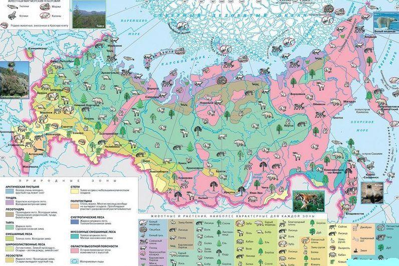Климат тайги: погода, температура, особенности природной зоны