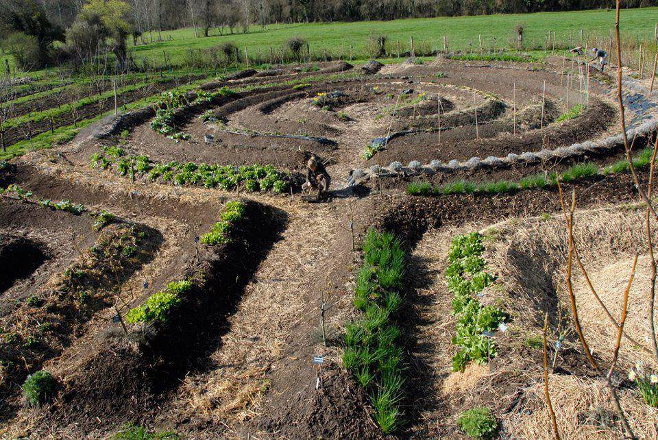 Permaculture: лучшая фермерская система, чтобы накормить мир - - здоровье - 2020