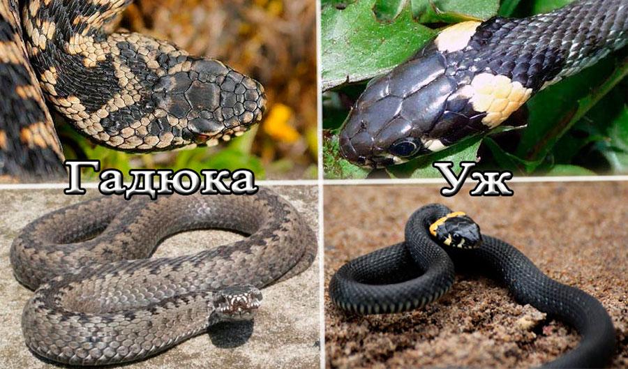 Змея – описание, виды, где обитает, чем питается, фото