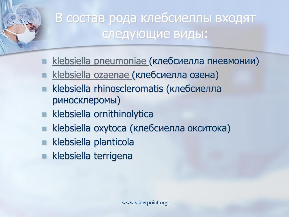 Клебсиелла - всё об опасной бактерии клебсиелла пневмонии
