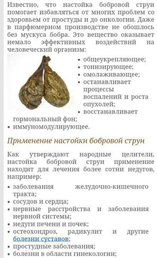 Струя бобра - лечебные свойства и применение