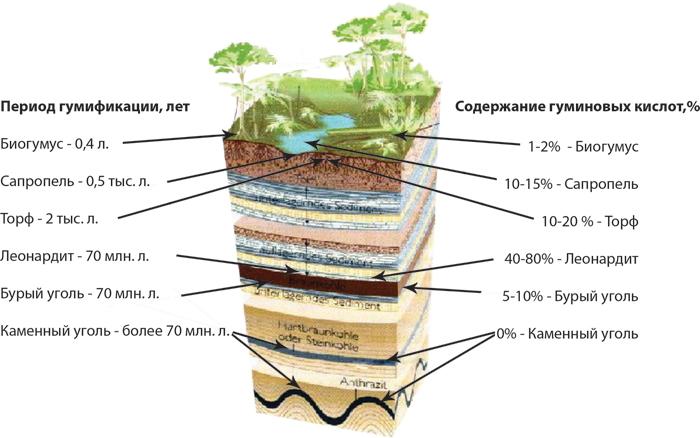 Чем полезны гуминовые кислоты для здоровья человека — топотушки