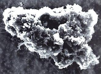 Откуда берется пыль, чем она вредна для нас и как с ней бороться * п—журнал