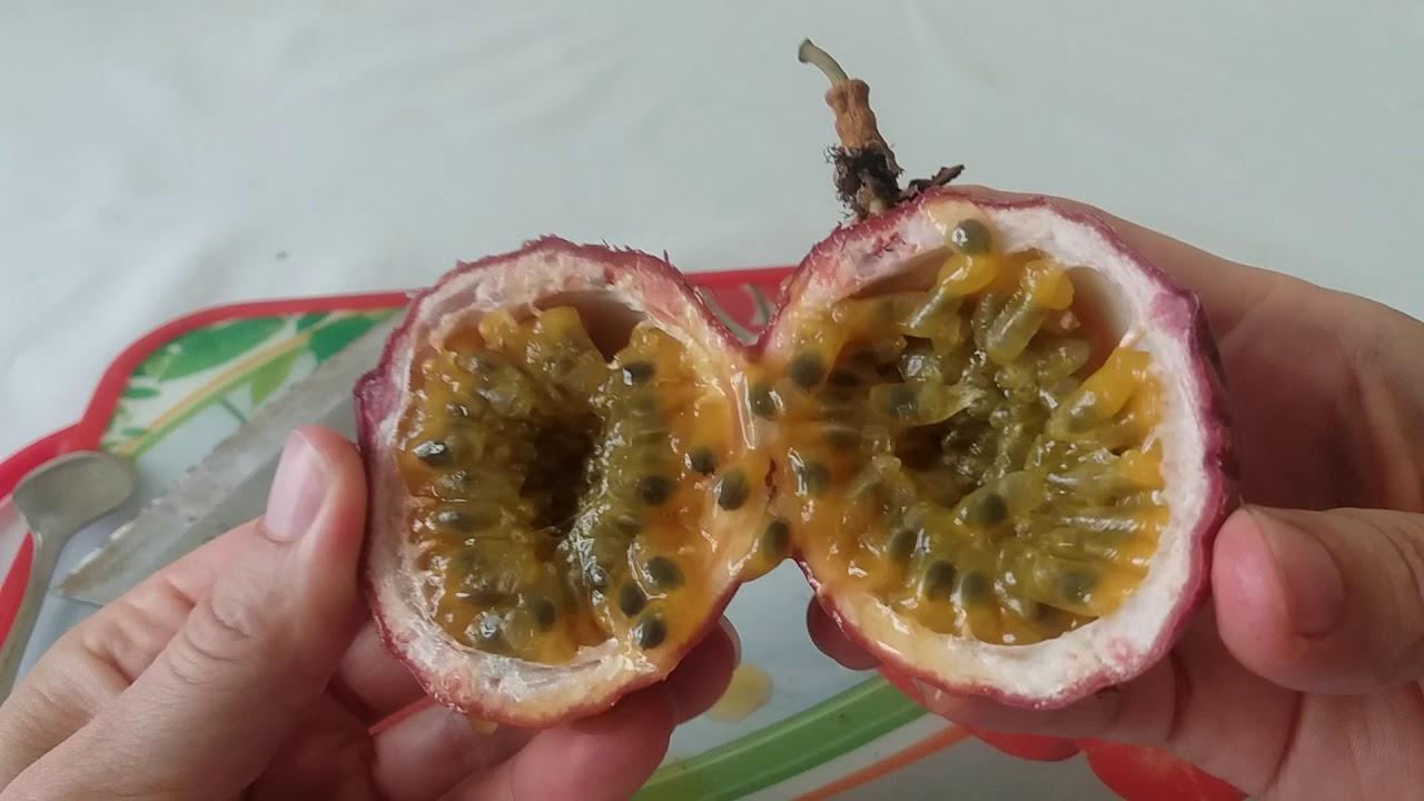 Маракуйя — фрукт страсти