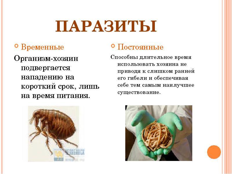 Что такое паразитизм? расскажите о разных формах паразитизма; приведите примеры. - универ soloby