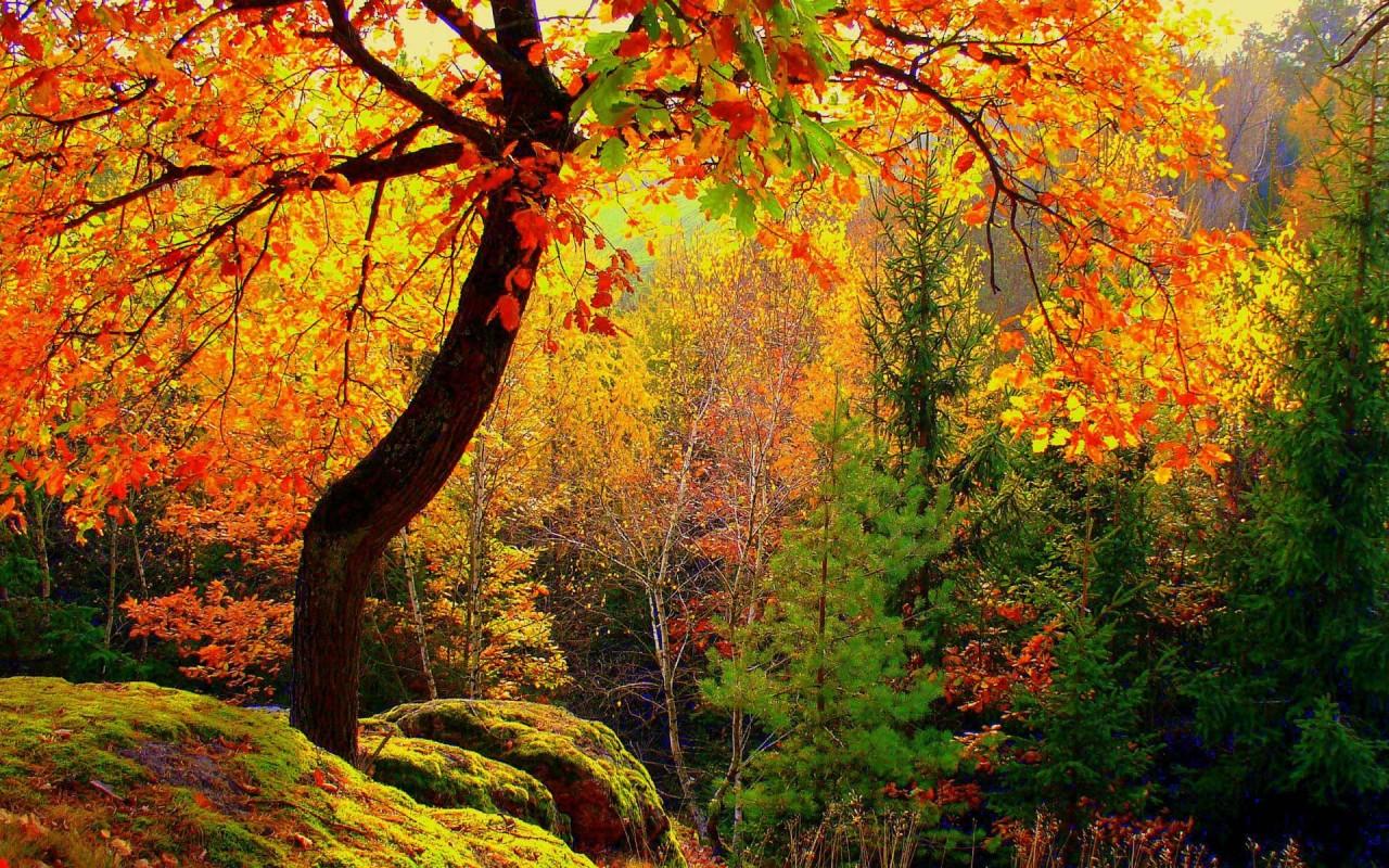 Что такое осень — википедия. что такое что такое осень