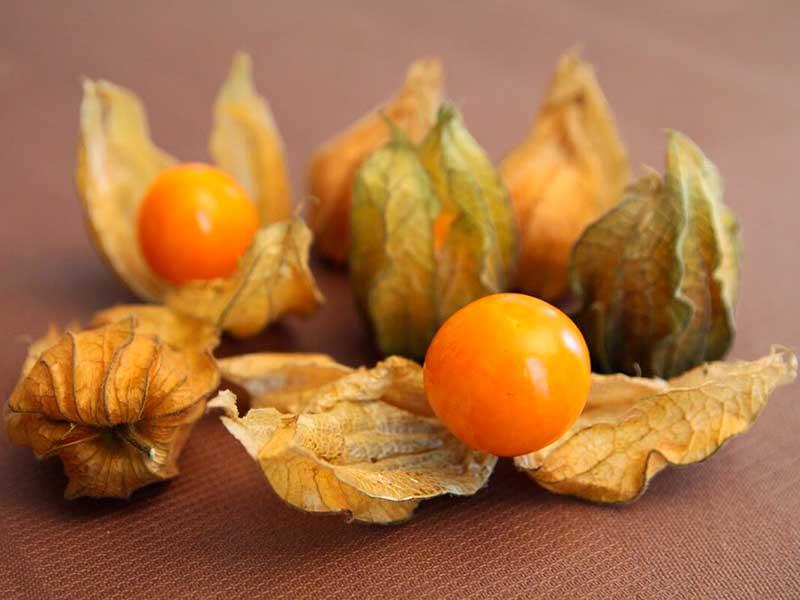 Растение физалис: фото, видео и описание, размножение, выращивание и уход за физалисом