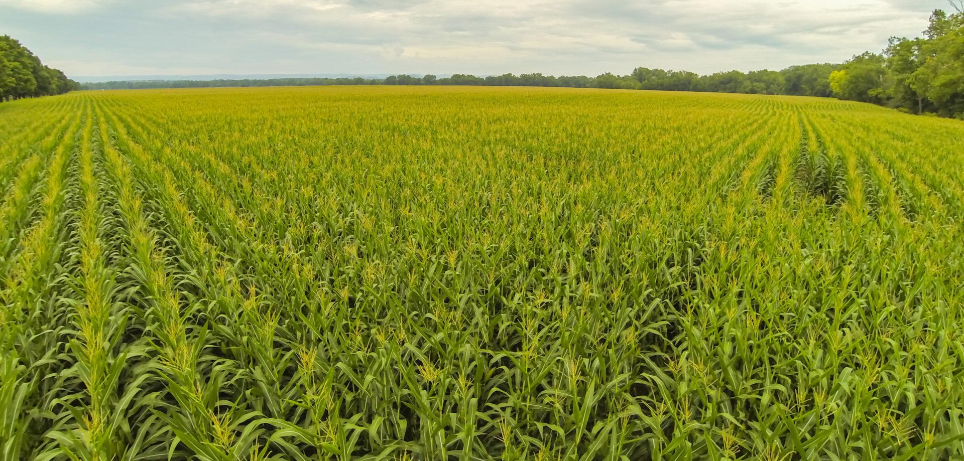 Органическое земледелие: чудо возможно!