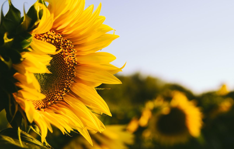 Летний праздник «что такое это лето?» для детей среднего и старшего дошкольного возраста. воспитателям детских садов, школьным учителям и педагогам - маам.ру
