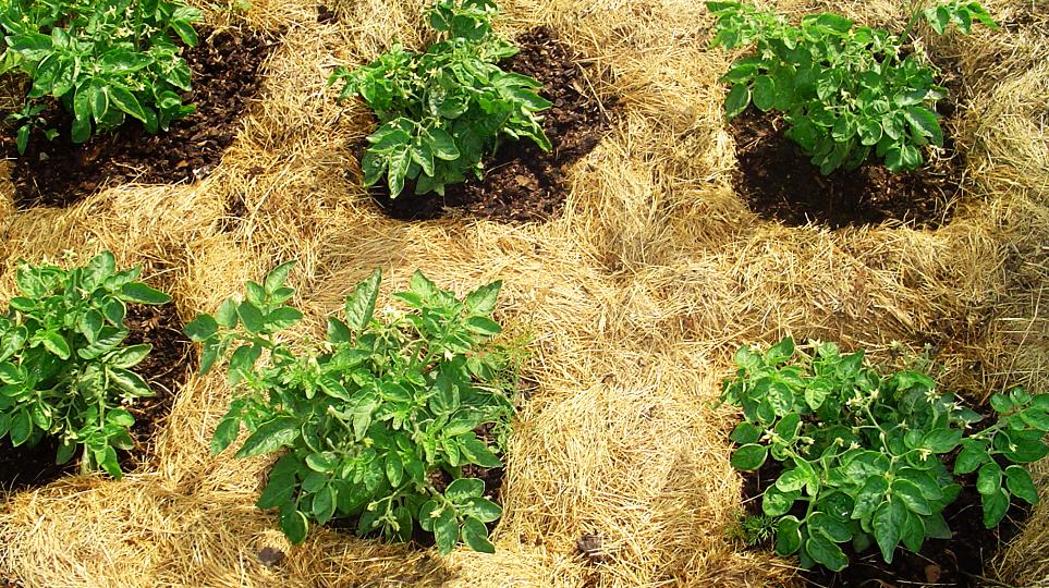 Что такое мульчирование почвы: польза, виды мульчирования и ее применение