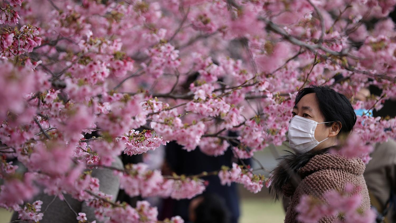 Япония: природа и ее особенности, климат, достопримечательности и красивые города страны