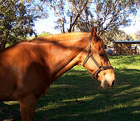 Что такое кон? значения слова