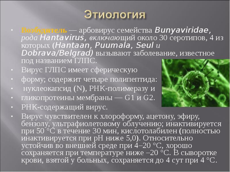 Хантавирус: как предотвратить это передаваемое грызунами заболевание | пища это лекарство