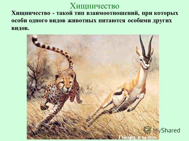 Хищничество — википедия. что такое хищничество