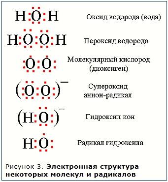 Свободные радикалы в организме человека и антиоксиданты