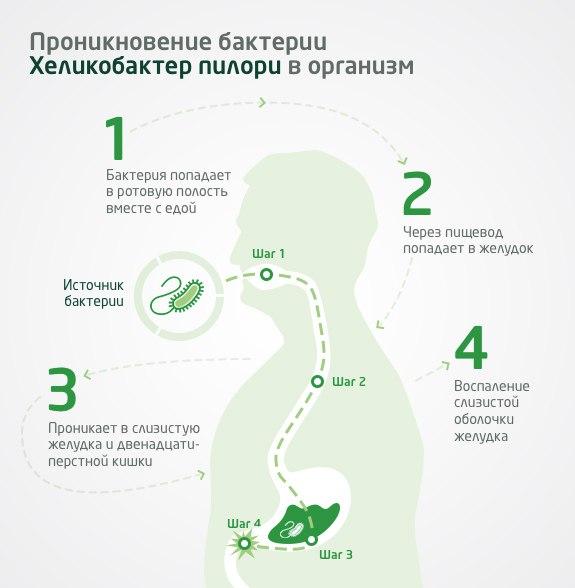 Бактерия хеликобактер: симптомы, причины и лечение