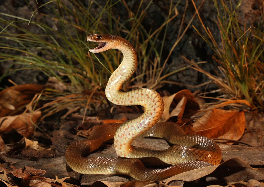 Змей (мифология) — википедия. что такое змей (мифология)