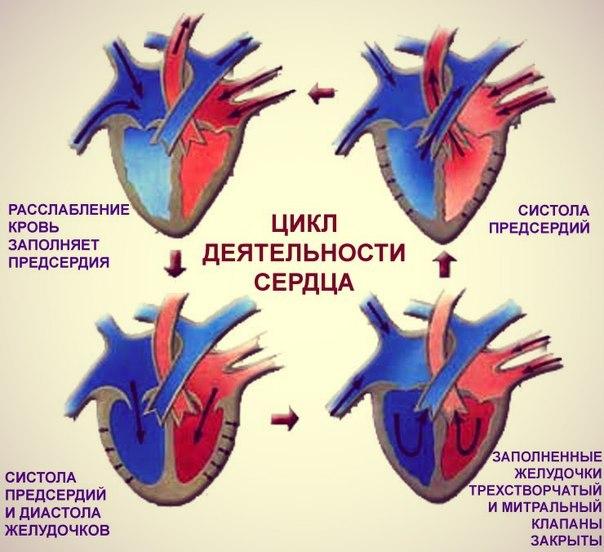 Что такое диастолическое и систолическое артериальное давление