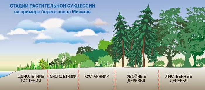 Экологическая сукцессия – главная особенность и значение
