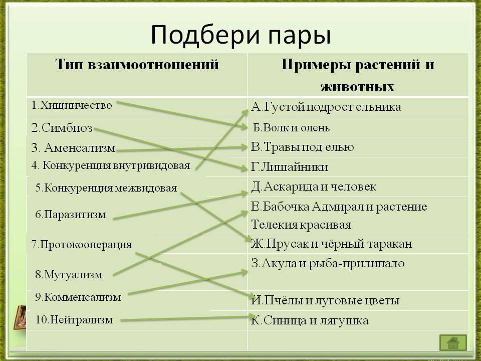 Взаимоотношения между организмами