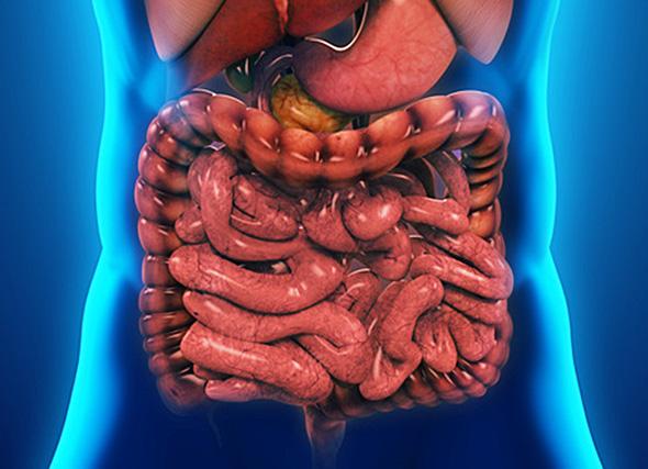 Атония кишечника: причины, симптомы и лечение препаратами и народными средствами (видео)