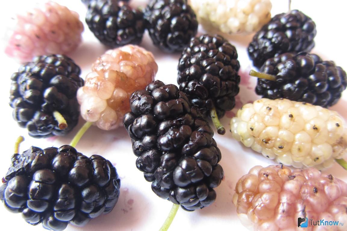 Шелковица: фото, описание сортов, полезные свойства ягод