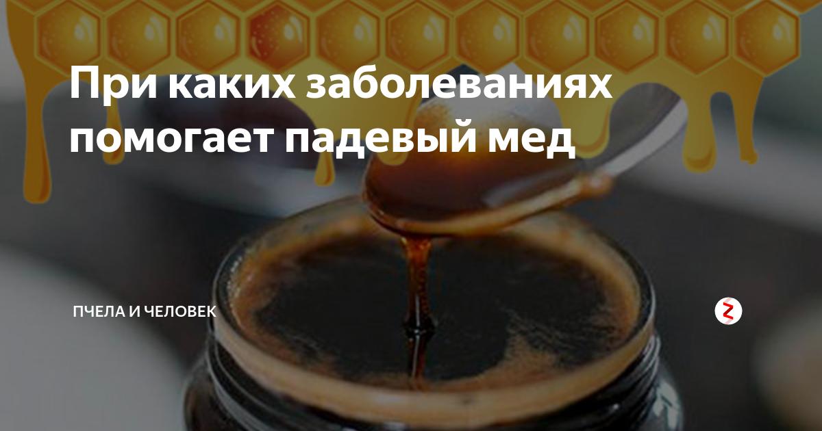 Падевый мед: что это такое и как его отличить