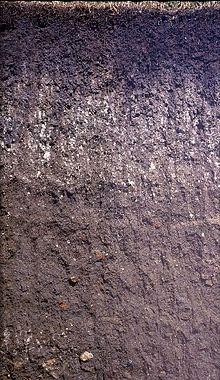 Чернозем: состав, плюсы, откуда берется, получение, применение