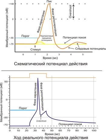 Потенциал (физика) википедия