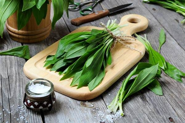 Черемша - что это такое, полезные свойства, как выглядит растение и рецепты заготовки на зиму