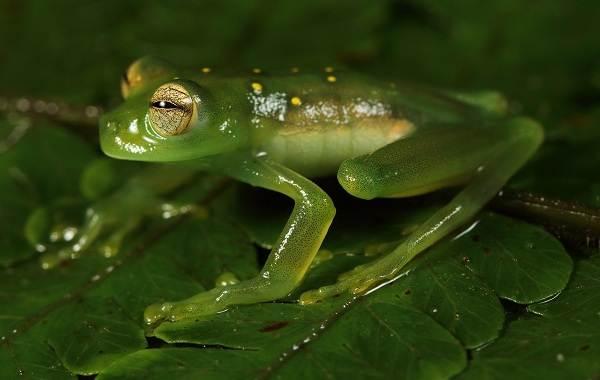 Лягушки — виды и описание
