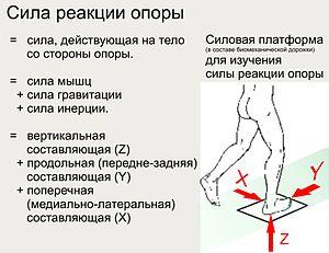 Спортивная ходьба: техника и польза, как правильно ходить для похудения