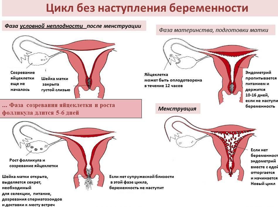 Что такое месячные? менструация у женщин
