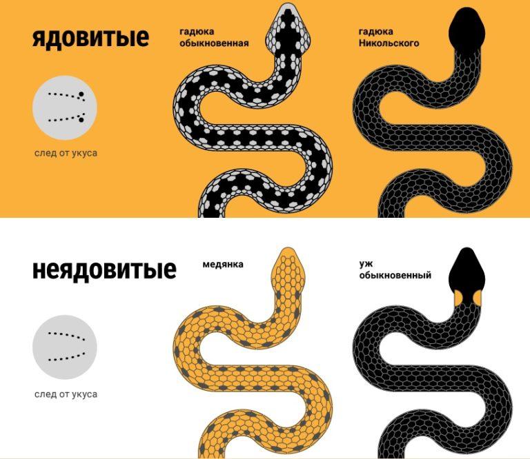 Змей (мифология)