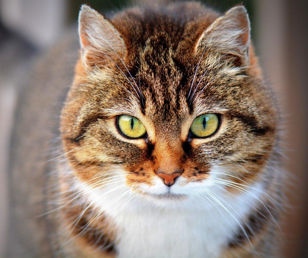 Котик, валентин александрович — википедия. что такое котик, валентин александрович