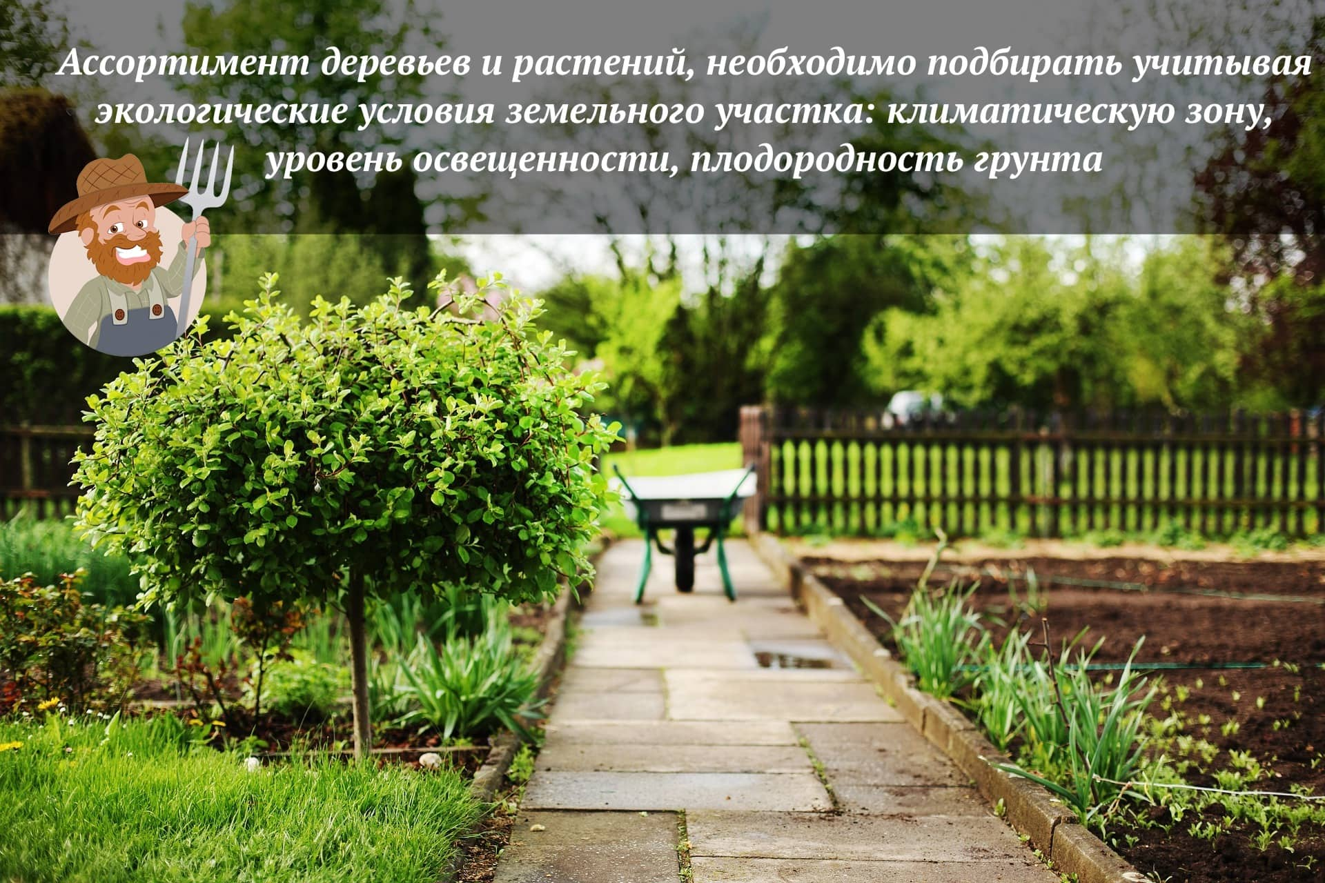 Красивые виды и сорта хвойников для дизайна сада и дачи
