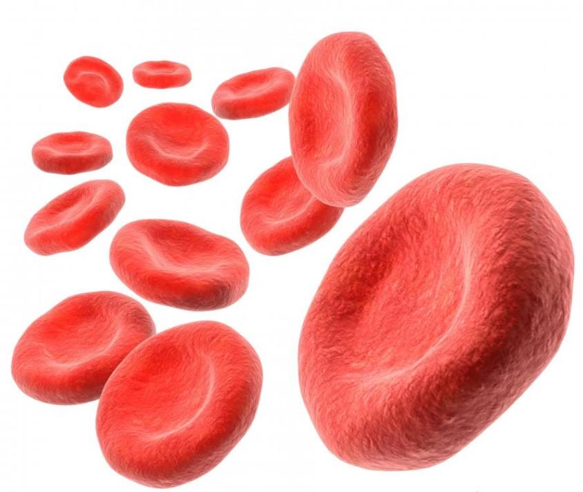 Анализ крови на эритроциты. исследуемые характеристики, норма эритроцитов в крови и где сдать анализ