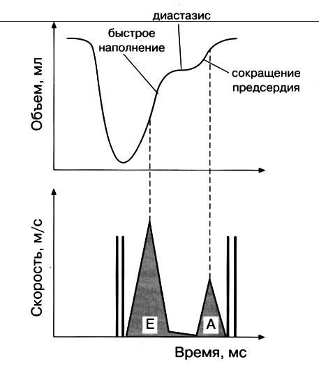 ✅ что такое диастолическая дисфункция левого желудочка по 1 типу - денталюкс.su