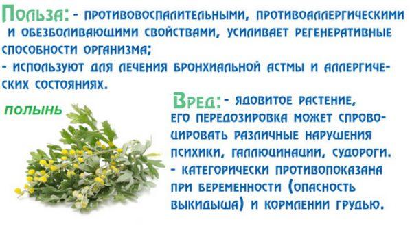 Полынь горькая: лечебные свойства и противопоказания, применение в народной медицине, где растет трава (зоны), рецепты от паразитов, отличия от обыкновенной
