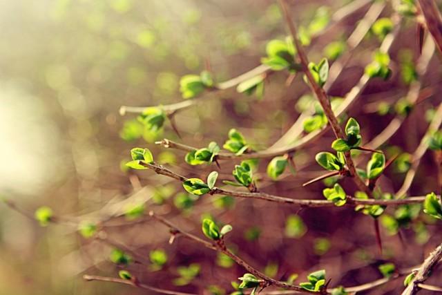 Вегетация растений — что это, и как в такой период они растут и развиваются
