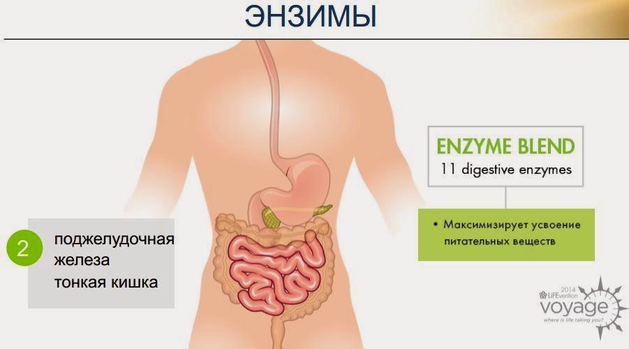 Энзимная терапия для лечения практически любых видов рака