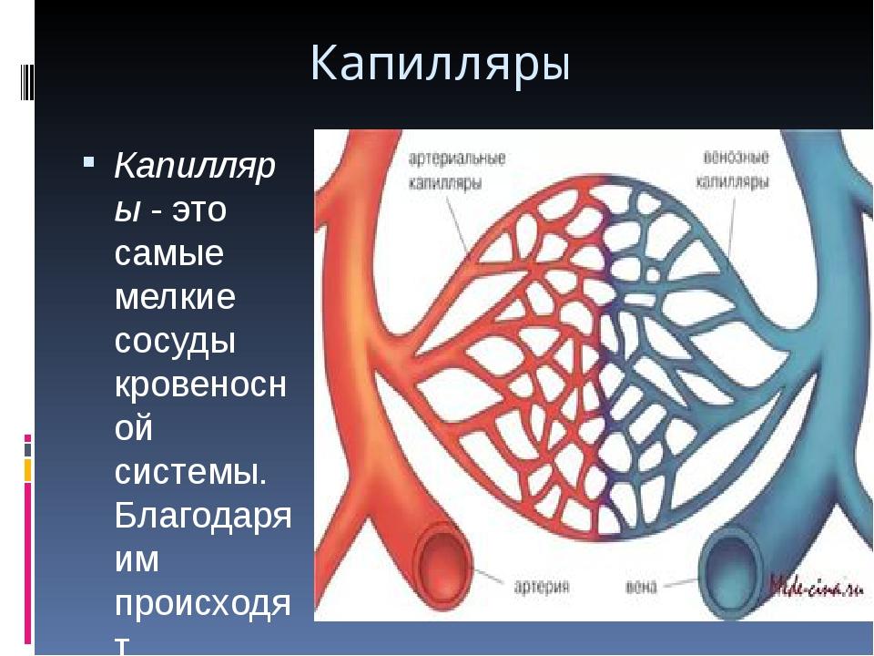 Капилляры в организме человека: строение и функции