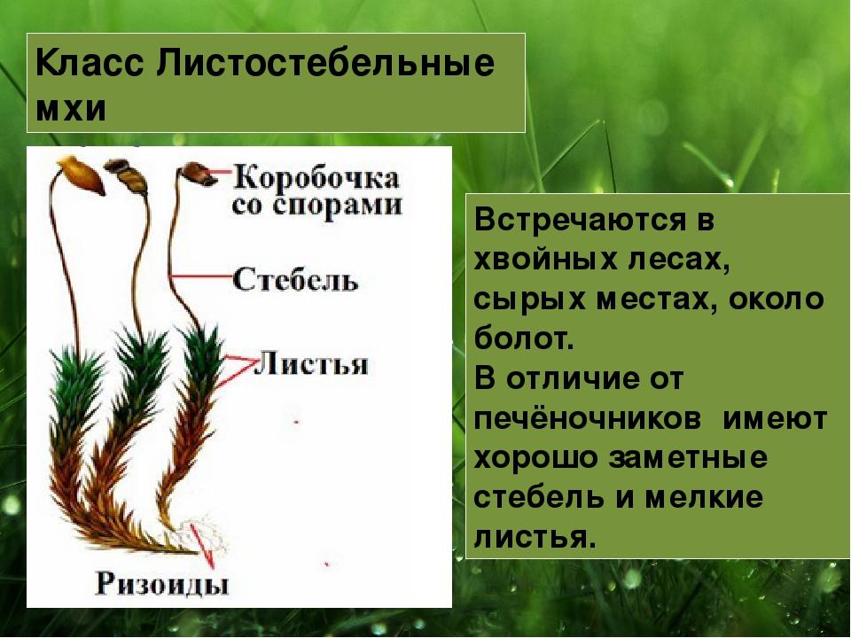 Есть вопрос: что такое мох сфагнум и для чего он нужен? | дела огородные (огород.ru)