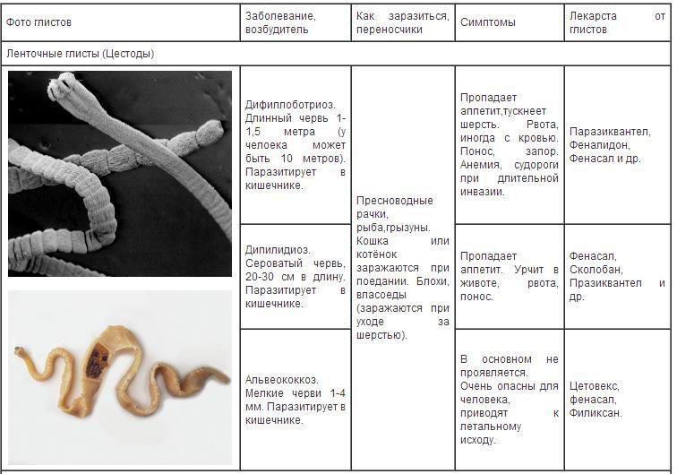 Признаки заражения паразитами у человека и диагностика