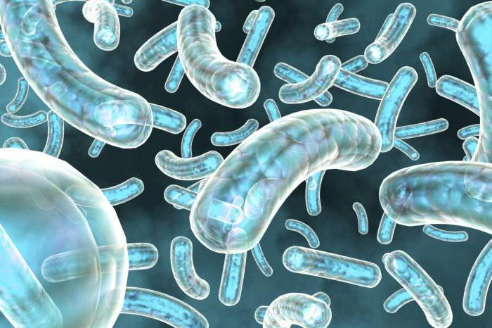 Пцр-исследование: флороценоз-ncmt (neisseria gonorrhoeae,chlamydia trachomatis, mycoplasma genitalium, trichomonas vaginalis)