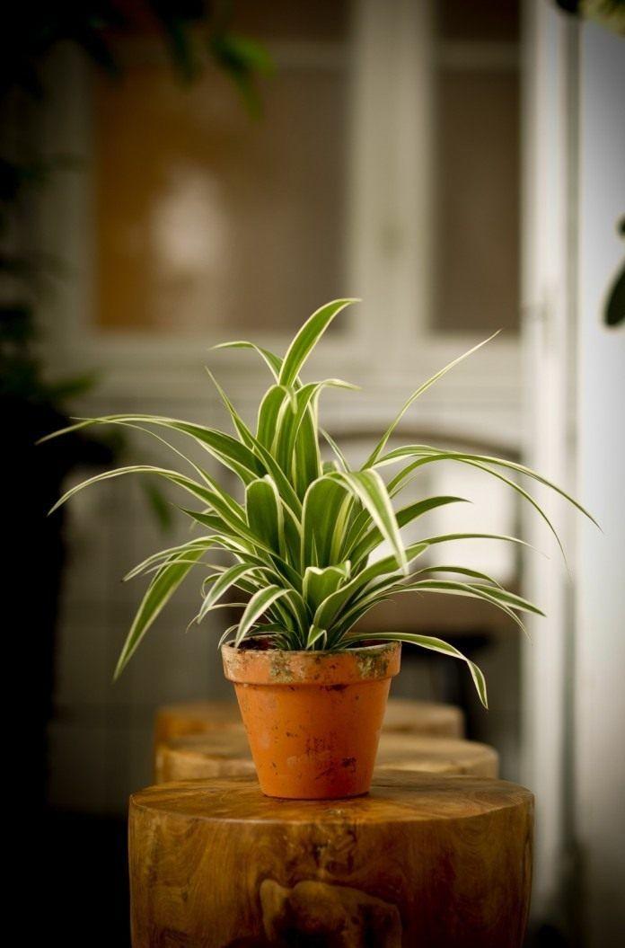 Фитонцид - это... свойства фитонцидов. растения, содержащие фитонциды
