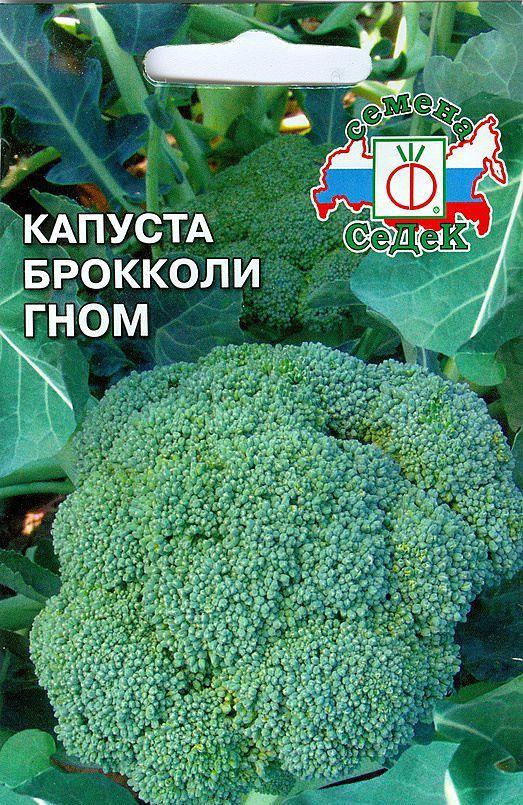 Капуста кольраби: полезные свойства и противопоказания, выращивание в открытом грунте, уход за стеблеплодом, а также как выглядит овощ на фото, что у него едят?